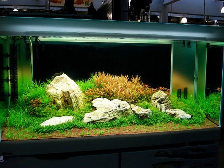 correct fish tank